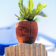 Tropical plant in a red clay pot on the ancient column. — Stock Photo