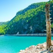 Royalty-Free Stock Photo: Dry tree trunk on the shore of a mountain lake
