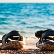 Beach shoes at the edge of the sea on the sandy beach. — Stock Photo