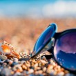 Sunglasses and shells lie on the shingle beach sea — Stock Photo