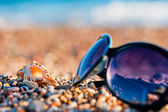 Sunglasses and shells lie on the shingle beach sea — Stock Photo