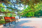 Empty bench in South Park — Stock Photo