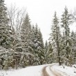 Road in a winter snow-covered wood — Stock Photo