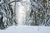 Winter road in a snowy forest — Photo