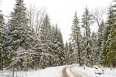 Road in a winter snow-covered wood — Stock fotografie