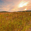 Royalty-Free Stock Photo: Wild field in central Russia at dawn