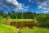 Summer landscape with a small lake on the background of pine trees. — Stock Photo