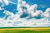 Beautiful clouds over the field chamomile — Stock Photo