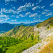Summer mountain landscape in sunny weather. Altai. — Stock Photo