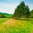 Rural landscape with birch trees planted along the road. Altai Mountains. — Stock Photo