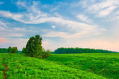 Bright sky at sunrise on a green hilly meadow — Stock Photo