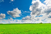 Beautiful clouds over the green field on a sunny day — Stock Photo