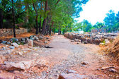 The ruins of ancient Olympos, Turkey — Stock Photo