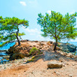 Stock Photo: Beautiful pines grow on peninsula