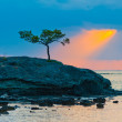 Lone pine tree on a rocky seashore and sunbeam  — Stock Photo
