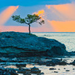 Stock Photo: Picturesque pine tree on rocky seashore at sunrise