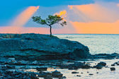 Picturesque pine tree on a rocky seashore at sunrise — Stock Photo