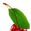 Green leaf and juicy ripe cherries — Stock Photo