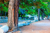 Pine Avenue and the ruins of ancient Phaselis — Stock Photo
