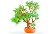 Drzewo japoński pieniądze koraliki i monety — Zdjęcie stockowe