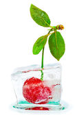 Ripe cherries with green leaves frozen in ice cube — Stock Photo