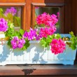 Planters with pink flowers on the windowsill — Stock Photo