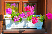Planters with pink flowers on the windowsill — Foto Stock
