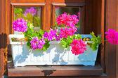 Fioriere con fiori rosa sul davanzale della finestra — Foto Stock
