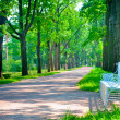 Beautiful landscaped park summer day — Stock Photo #40981981