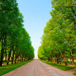 Green alley in a summer park — Stock Photo