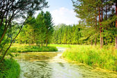 River with mud flows in the coniferous forest — Stock Photo