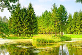 Russian forest landscape beautiful summer day — Stock Photo