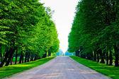 Tall trees with lush foliage — Stock Photo