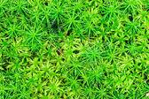 Big juicy shot green moss — Stock Photo