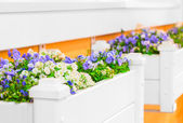 White flower gardens with beautiful flowers on the windowsill — Stock Photo