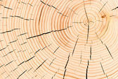 Background macro shot cut down a tree with cracks — 图库照片