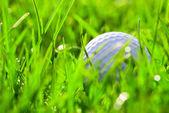 White golf ball on green grass — Stock Photo