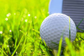 Golf ball in the grass early in the morning — Stock Photo
