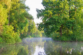 Beautiful scenery of Lake Forest with fog — Stock Photo