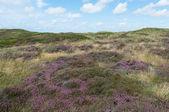 Dunes of Texel — ストック写真