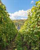 Curch in vineyard — Stock Photo