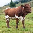 Cow in mountains — Stock Photo #31788393
