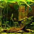 Aquarium with many fish and plants - Stock Photo