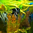 Aquarium with many fish and plants - Stok fotoğraf