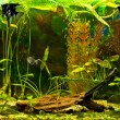 Aquarium with many fish and plants — Stock fotografie