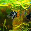 Aquarium with many fish and plants - Stok fotoraf