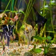 Aquarium with many fish and plants - 图库照片
