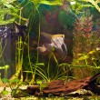 Aquarium with many fish and plants — Stock Photo #22469597