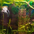 Aquarium with many fish and plants — Foto de Stock