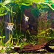 Aquarium with many fish and plants — Stock Photo #22469621